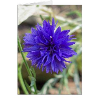 Blue cornflower note card