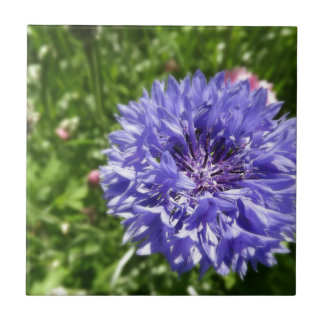 Blue cornflower small square tile