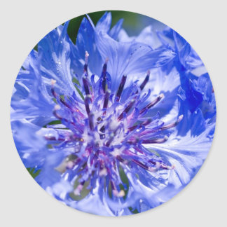 Blue Cornflower Classic Round Sticker