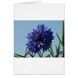 Blue Cornflowers Greeting Card