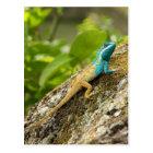 Blue-Crested Lizard Calotes Mystaceus Postcard
