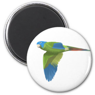 Blue-crowned Conure 6 Cm Round Magnet