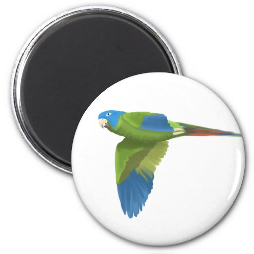 Blue-crowned Conure Refrigerator Magnet