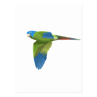Blue-crowned Conure Postcard
