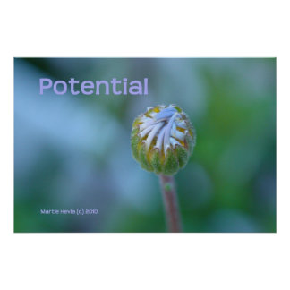 """Blue Daisy Bud Photo Print/Poster - """"Potential"""""""