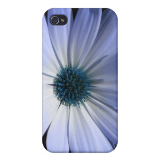 Blue Daisy Flower  iPhone 4/4S Cover
