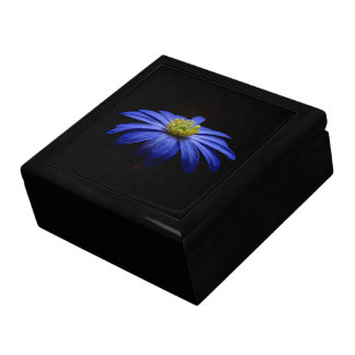 Blue Daisy Gerbera Flower on a Black background Large Square Gift Box