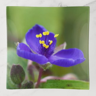 Blue Dayflower Floral Trinket Tray