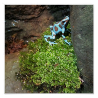 Blue Dotted Dart Frog Posters