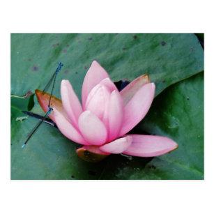 Pink Lotus Flower Gifts Weddings Zazzlecouk