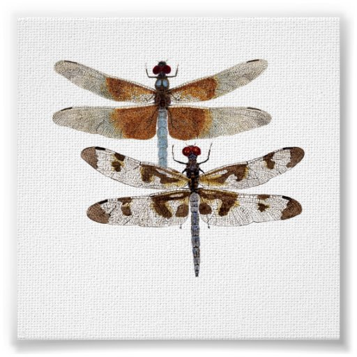 Blue Dragonflies Posters