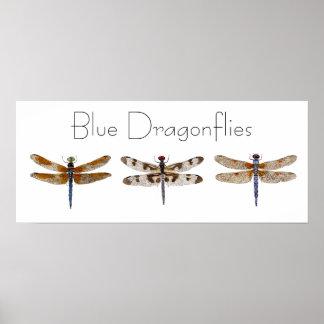 Blue Dragonflies Poster