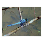 Blue DragonFly 2 Poster