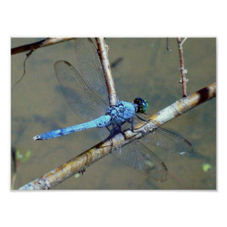Blue DragonFly 2 Print