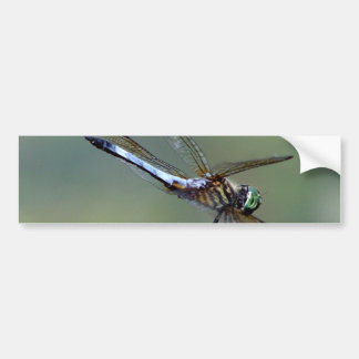 Blue  Dragonfly Bumper Sticker