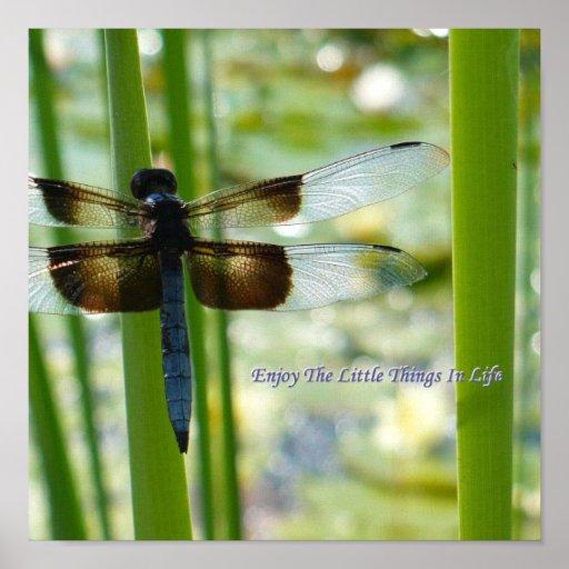 Blue Dragonfly Canvas Print