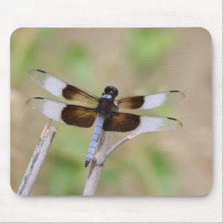 Blue Dragonfly III Mouse Pad