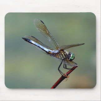 Blue  Dragonfly Mouse Mat