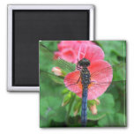 Blue dragonfly on pink flower green background magnets