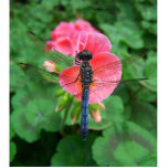 Blue dragonfly on pink flower green background acrylic cut outs