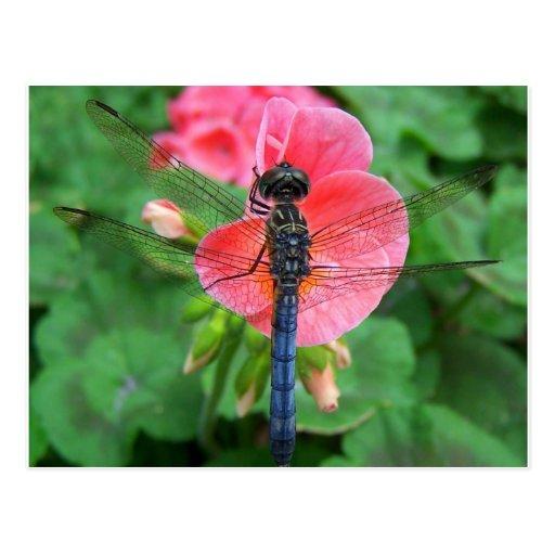 Blue dragonfly on pink flower green background postcard