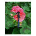 Blue dragonfly on pink flower green background poster