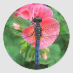 Blue dragonfly on pink flower green background round stickers