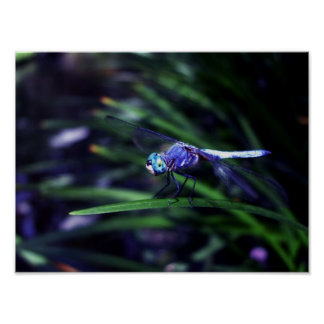 Blue Dragonfly Print