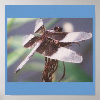 Blue Dragonfly Print
