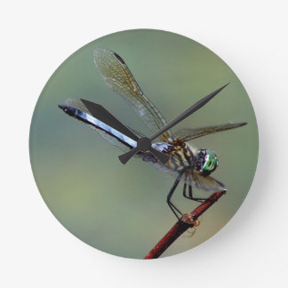 Blue  Dragonfly Round Clock