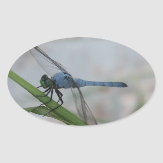 Blue Dragonfly Oval Sticker