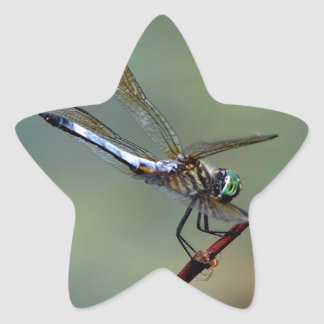 Blue  Dragonfly Star Sticker