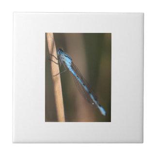 Blue Dragonfly Tile/Trivet Tile