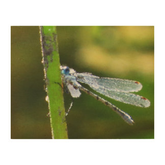 Blue Dragonfly Wood Canvas