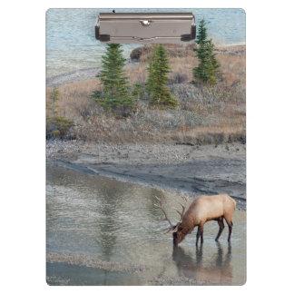 Blue Elk, Rocky Mountain Clipboard
