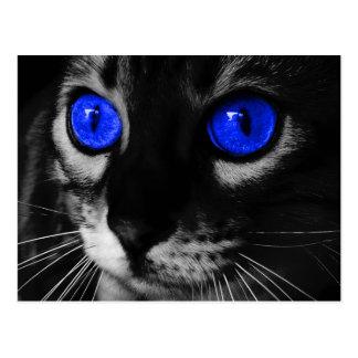 Blue Eye Cat Postcard