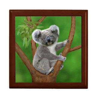 Blue-Eyed Baby Koala Bear Gift Box