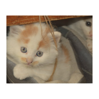 Blue Eyed, Brown and White patched Kitten in boot Wood Canvas