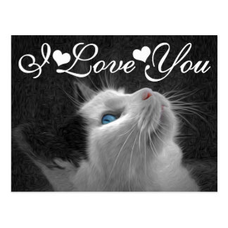 Blue Eyed Cat Photo Image I Love You Postcard