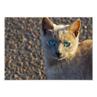 Blue Eyed cat Photo Print