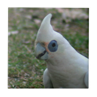 Blue Eyed Cockatoo Tile