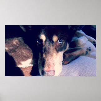 Blue Eyed Dog Poster