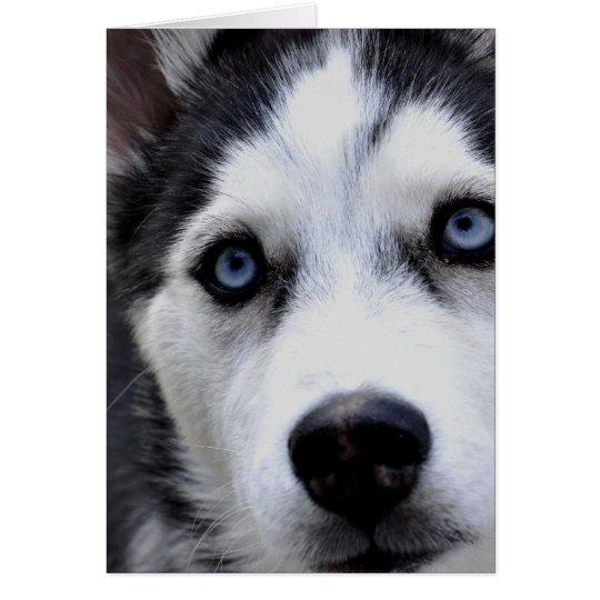 Blue Eyed Husky Greeting Cards