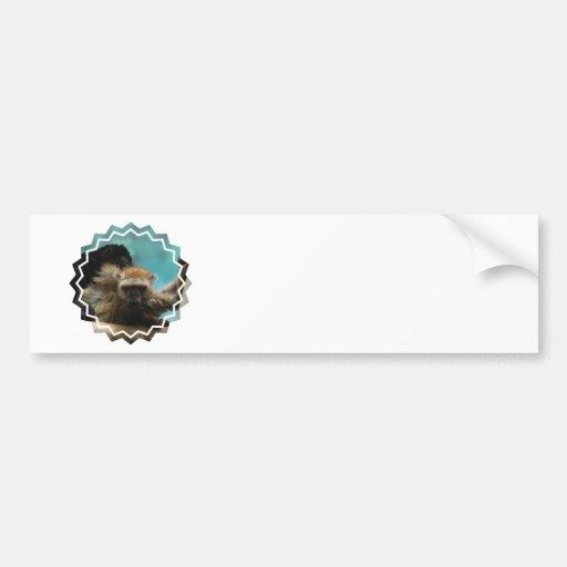 Blue Eyed Lemur Bumper Sticker