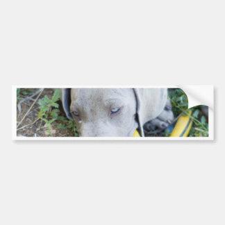 Blue Eyed Puppy Bumper Stickers