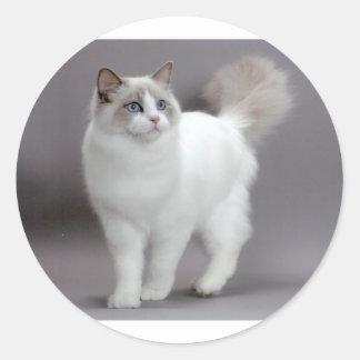 Blue-Eyed Ragdoll Cat Purfection Round Sticker