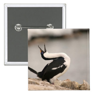 Blue-Eyed Shag in nesting colony Petermann 15 Cm Square Badge