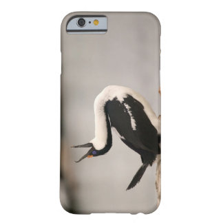 Blue-Eyed Shag in nesting colony Petermann Barely There iPhone 6 Case