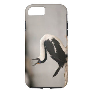 Blue-Eyed Shag in nesting colony Petermann iPhone 8/7 Case
