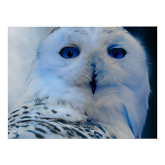 Blue Eyed Snow Owl Posters